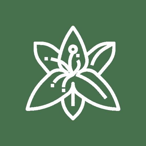 Noun Lily 1792789